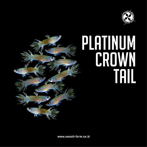 PLATINUM CROWN TAIL
