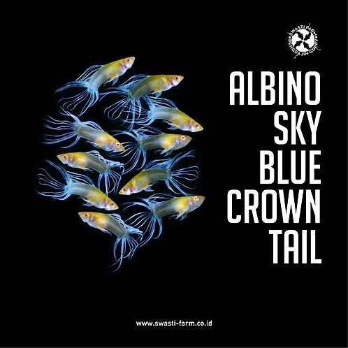 ALBINO SKY BLUE CROWN TAIL/TOPAZ CT