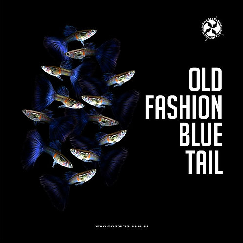 OLD FASHION BLUE TAIL