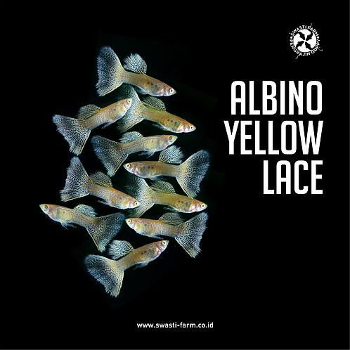 ALBINO YELLOW LACE
