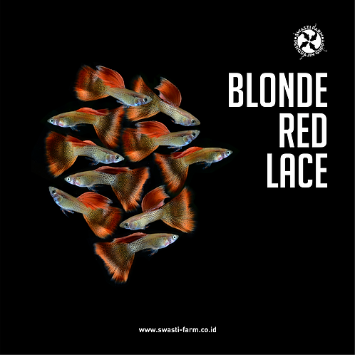 BLONDE RED LACE