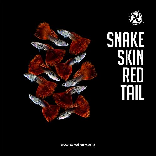 SNAKE SKIN RED TAIL