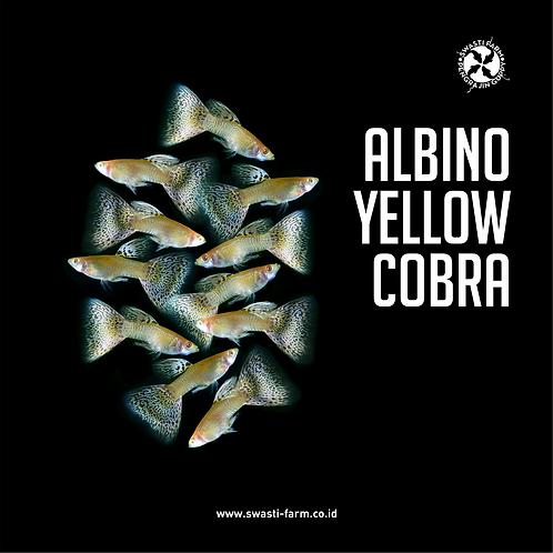 ALBINO YELLOW COBRA