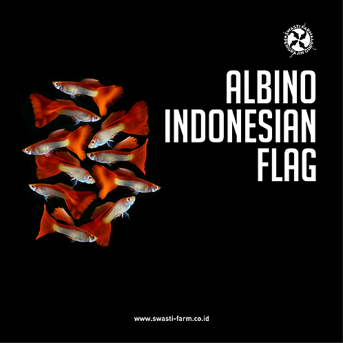 ALBINO INDONESIAN FLAG