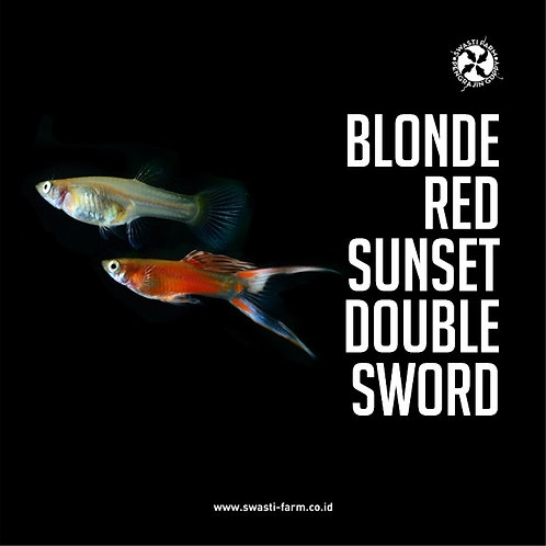 BLONDE RED SUNSET DOUBLE SWORD