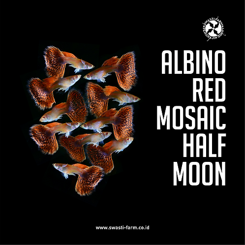 ALBINO RED MOSAIC HALF MOON