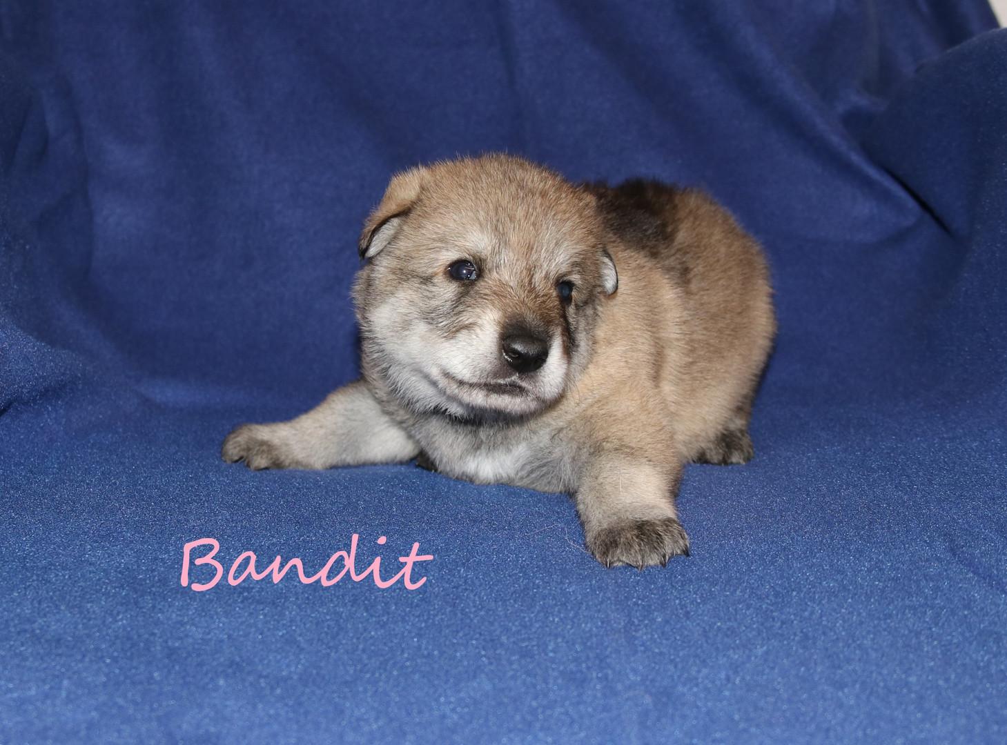 Bandit 30.11.2018
