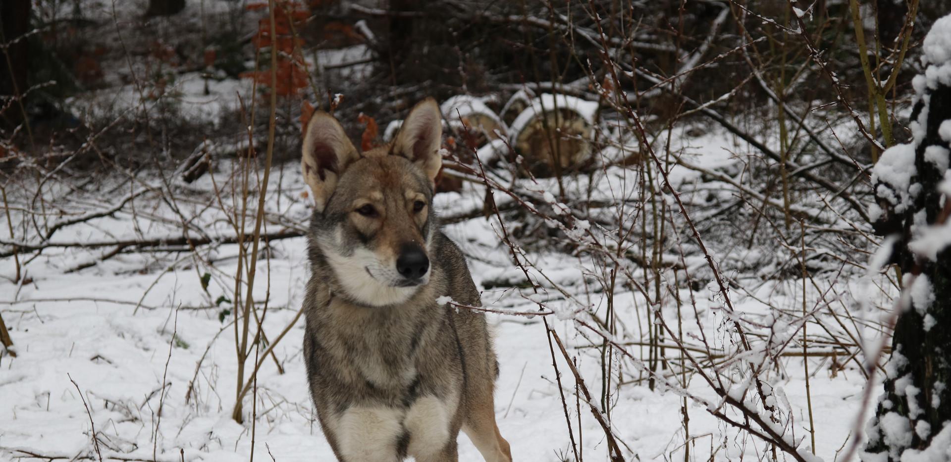 Alaska Kenda Waban, Februar 2019
