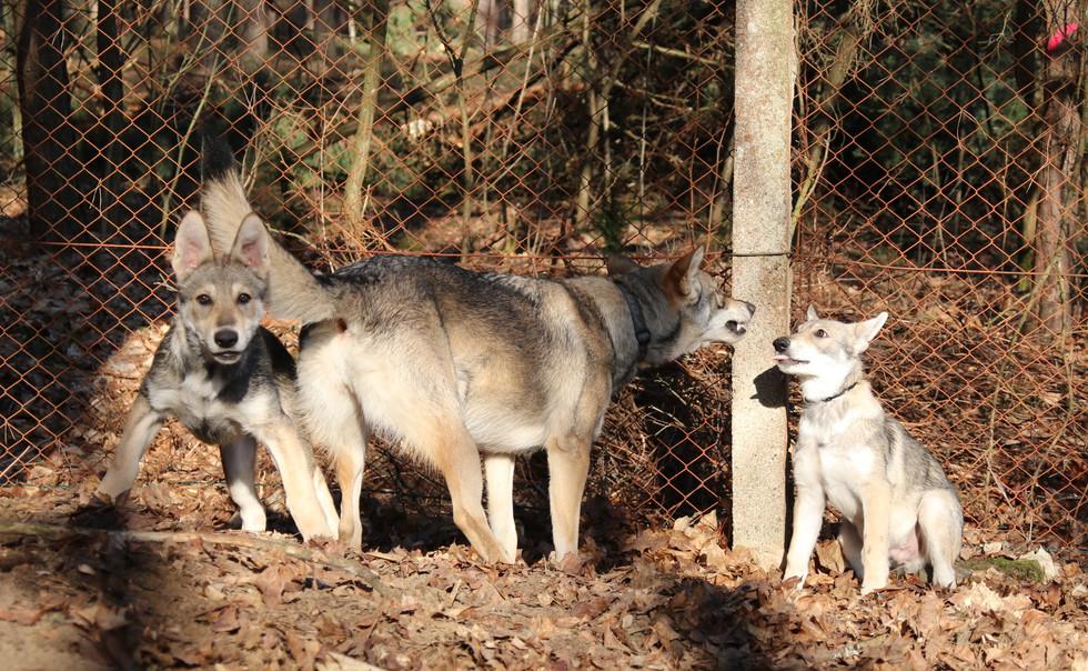 Belana, Alaska & Bandit Kenda Waban