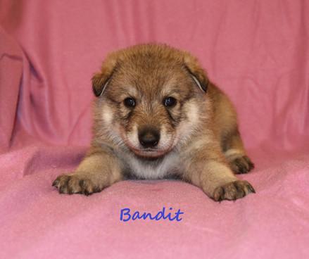 Bandit 06.12.2018