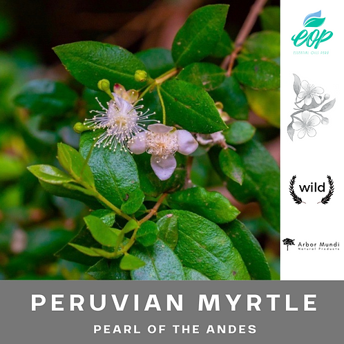 Wholesale Peruvian Myrtle Essential Oil
