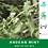 Thumbnail: Wholesale Andean Mint (Muña) Essential Oil