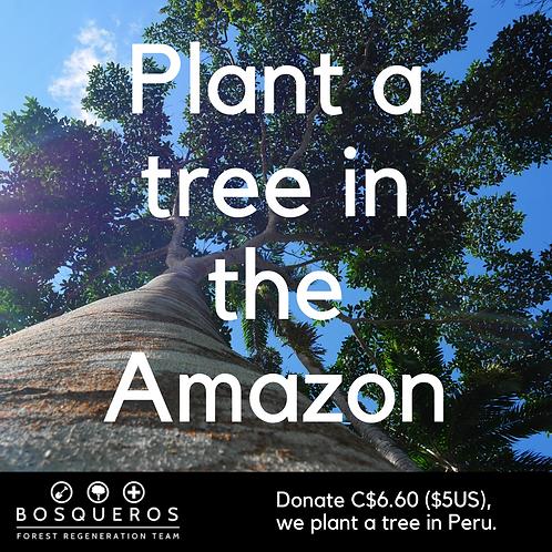 Plant a tree in the Amazon! (Bosqueros Peru Donation)