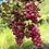 Thumbnail: Pink Pepper Essential Oil 10ml (0.33 fl oz)