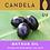 Thumbnail: Wild Bataua Oil (Ungurahui Oil / Pataua Oil)