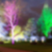 Botanic garden lit up for winter night using Battery LED uplighters