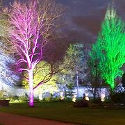 Botanic garden lit up for winter night using Battery LED uplighters