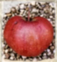 Lady's Delight apple