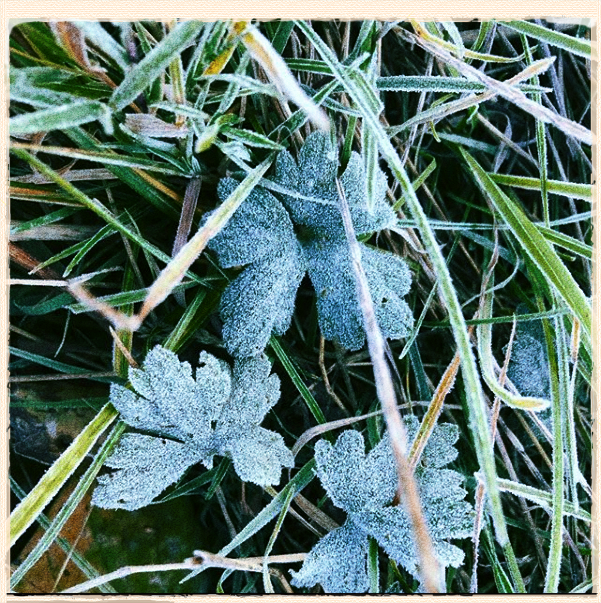 September In The Gardens: Harvest And The First Frost