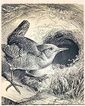the wren's nest.png