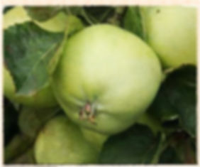 apple - lord grosvenor.jpg