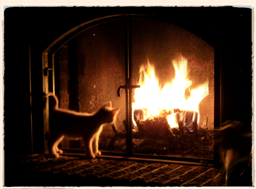 Logs For Burning