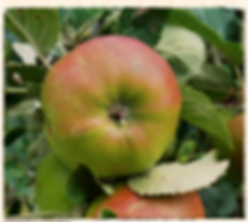 Betty Geeson, Walcot Organic Nursery