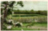 Loddington farm