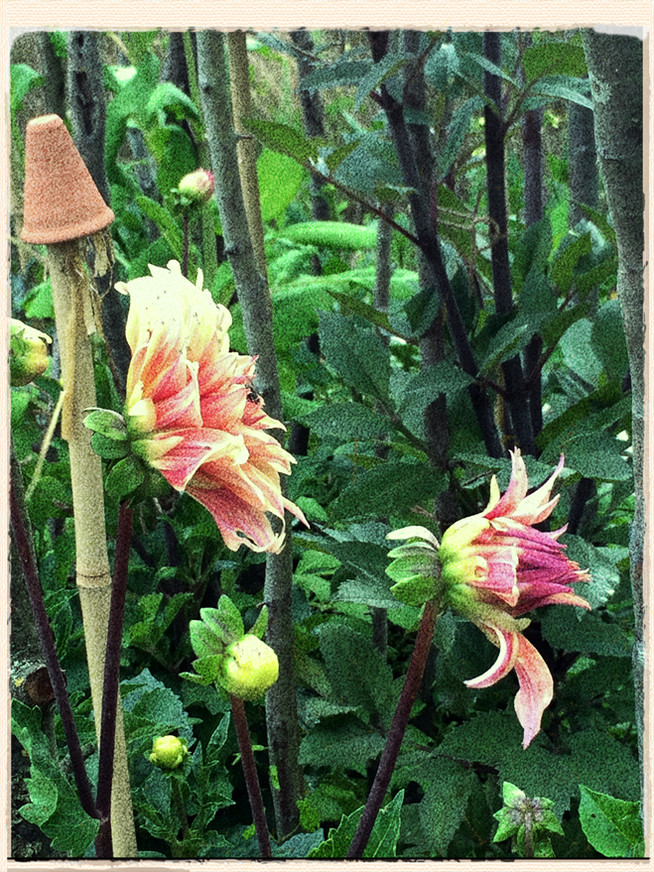 August In The Gardens: Greenery and Gold