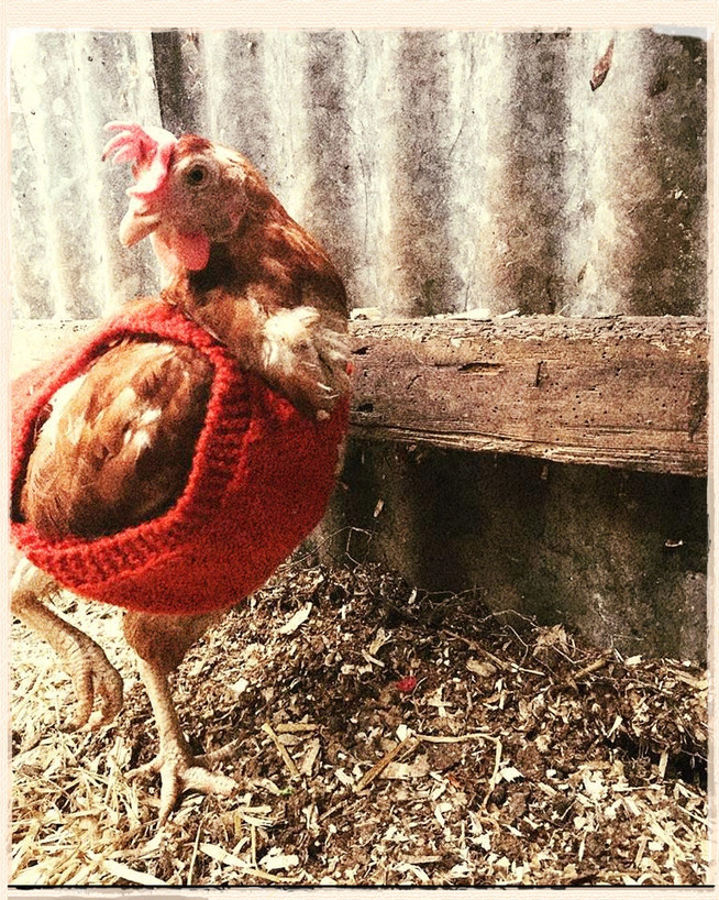 March in the Gardens: Hens are Hanging On and Pheasants are Revolting