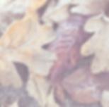 Screen Shot 2018-09-11 at 10.04.23.png