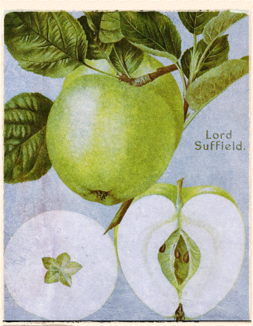Our Apple for March: Lord Suffield
