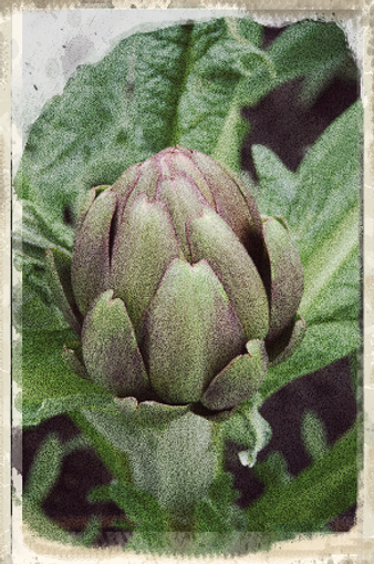 artichoke by © Emma Cooper via Flickr