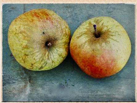 Loddington apple