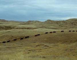 seymour milton composer muzi quawson short film 16mm installation duke northern montana cowboy
