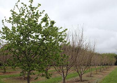 pop up materials orchard.JPG
