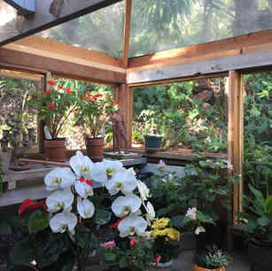 Renovated Glass Room for Orchids