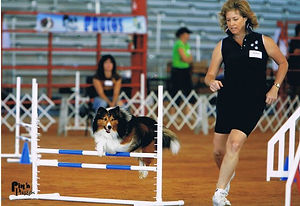 Here is my dog Duncan and I competing in
