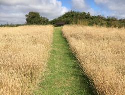 Path across our fields