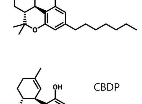 Researchers Discover Two New Cannabinoids in Italian Variety of Cannabis