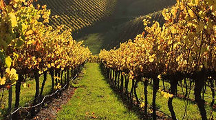 vines-2.jpg