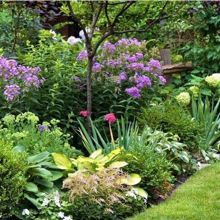 ¿Cómo diseñar tu jardín ecológico?
