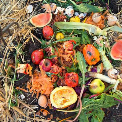 El desperdicio de comida:                 un problema de las sociedades modernas