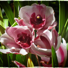 april orchid 1.jpg