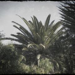 palm 32 copy.jpg