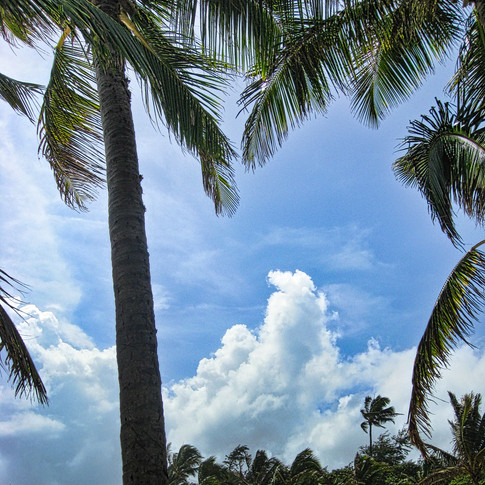 Clouds Palms 02 copy.jpeg