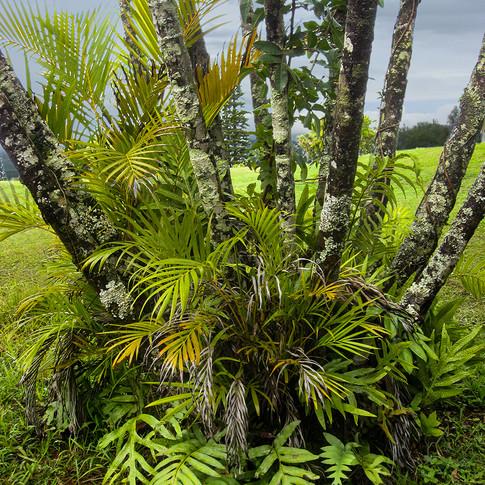 W Small Palms.jpg