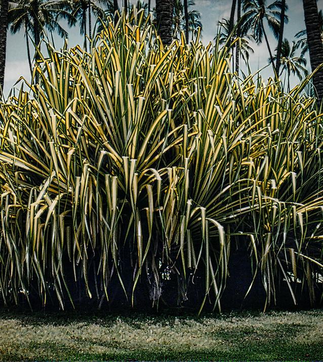Big Old Plant copy 2.jpg