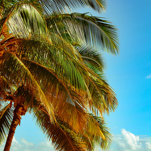 palm tint sharp.jpg