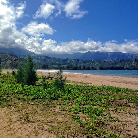 hanalai beach.jpg